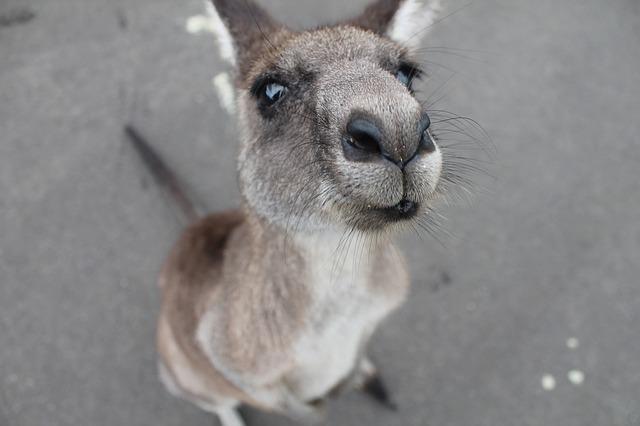 Visite de l'Australie